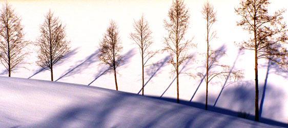 schnee mit tieren